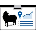 Livestock Supply Chains