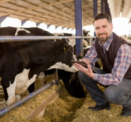 Dairy farmer with technology