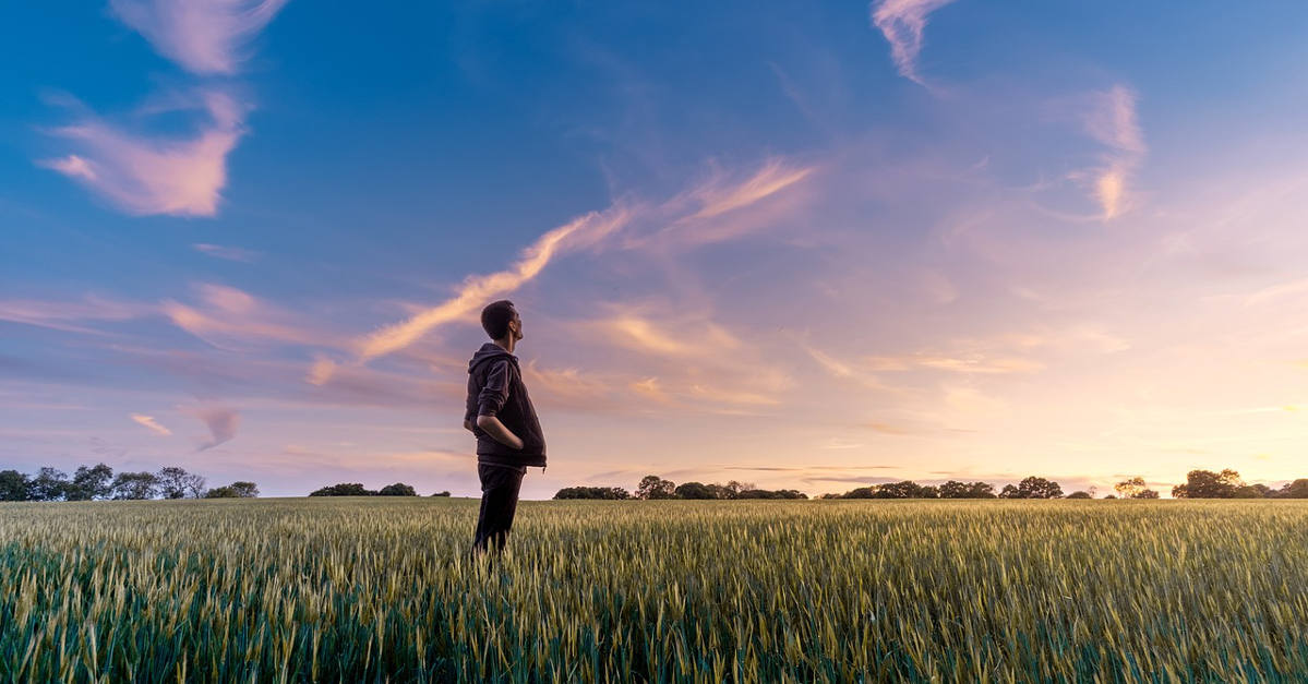 Person in field stares at the sky