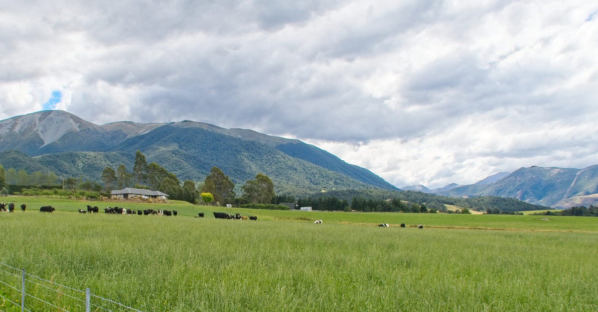 Photo of dairy pastures